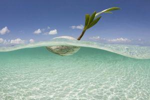 """Coconut""  by Ethan Daniels"