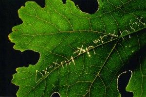 'Leaf Equasion' by Eve Andrée Laramée
