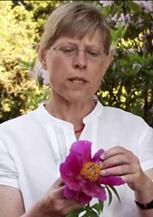 Gitte Petersen, botanist