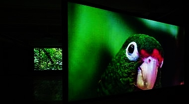 Images from The Great Silence: a video installation by Allora, Calzadilla, & Chiang