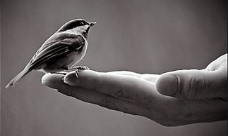 "Christine Grabig: ""A Bird in Hand"""